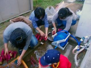 サツマイモ洗浄作業